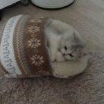 寝るネコは育つニャ~