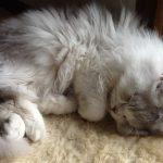 天使のような寝顔
