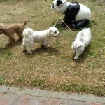 公園でパンダとの戯れ。。。