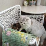 ネコ族の椅子とり合戦!