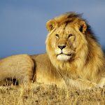 ライオン丸のチビにゃん