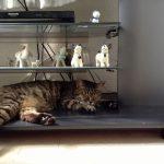 ローリーちゃんのお昼寝