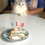 チビにゃん1歳の誕生日♪