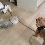 犬族の日課。。。with チビにゃん