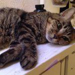 11歳には見えない美魔猫ローリーちゃん♪