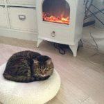 暖炉前であったまるローリーちゃん♪
