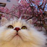 もう春だね( ^ω^ )久しぶりの公園