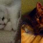 何となく似てる2猫。