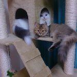 ママ友の愛猫モフティがしゃべる様子。