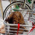 街で見かけたネコちゃん(#^.^#)
