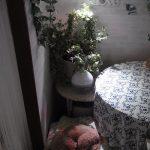植物育成ライトの下でお昼寝w