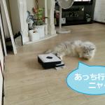 床拭きロボットブラーバ(Braava)を押し返すチビにゃんw
