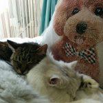 新しいベッドを満喫する猫組
