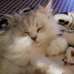 ママのひざの上で段々眠くなる②