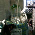 ピッピの周りに集まる猫組