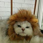 ライオンになったよだれが似合ってる?