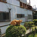 ネコさんがつげの木に乗ってた不思議な光景