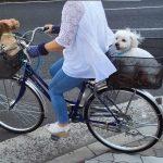 今日はママと自転車でお出かけするシュラとジュンちゃん