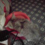ココナの水飲みと猫トイレのようす❤