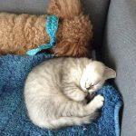 今日はシュラちゃんと添い寝するココナ