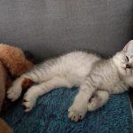 目が半開きで寝てるココちゃん(´∀`*)ウフフ