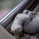 ココちゃん恒例の寝姿w(笑)