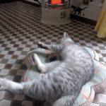 ストーブの前で寝る王さまココナ♪