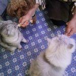 猫のおやつ「ちゅーる」を食べる時のココちゃんの特技!