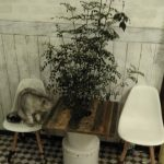 チビ専用の椅子がお気に入りの猫組