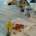 ピーナッツを食べるハビちゃん、見守るココナw