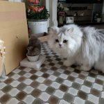 懐かしい子猫のココちゃん写真を発見!