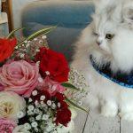 【猫の日】チビにゃんとローズ撮影🌹2月22日