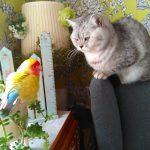 朝のトレーニングするハピちゃんとココ(笑)