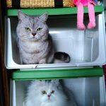 新しい隠れ家を見つけたネコ組たちのヒソヒソ話