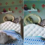 寝室の片付け後に窓のシール貼り【DIY】群がる猫組♪