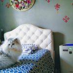 猫組の抜け毛対策に空気清浄機を置いたらマシになったよ!