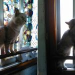 危険な窓際で遊ぶココちゃん