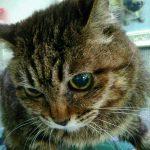 14歳の老猫ローリーちゃんが天国へ旅立ちました(泣) 2018年09月07日