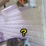 【かくれんぼ中】ココちゃんが探してるのは誰かな?
