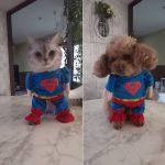 犬猫にスーパーマンの服を着させてみたよ♪誰が一番似合うかな?