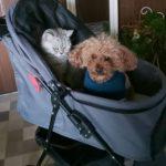 ココハートの甘えん坊バギー(3輪)が届いたので公園まで犬組を乗せてみたよ!