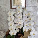 頂いた胡蝶蘭と西日避けのフェイクグリーンと一緒に記念写真♪