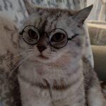 メガネの新バージョン♪一番賢そうなのは誰かな?